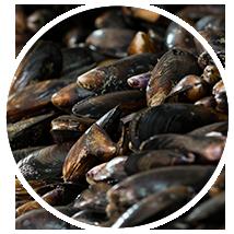 Mussels Landes