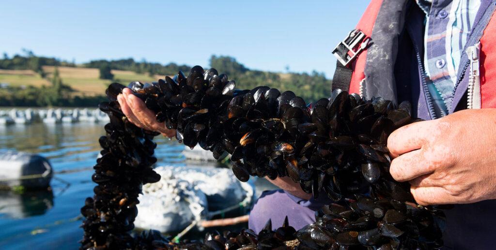 landes-bg-header-landes-mussels_02