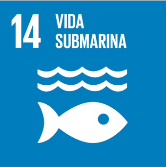 14-vida-submarina